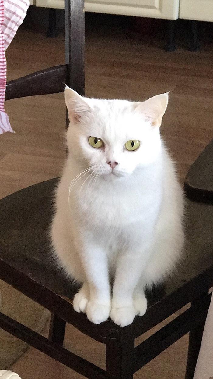 Умерла кошка Кот, Жаль, Радуга, Жизнь, Продолжается, Длиннопост
