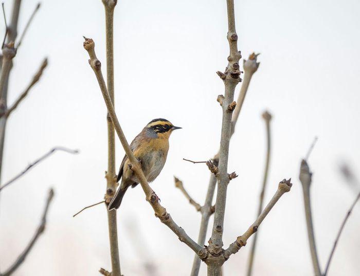 Помогите опознать птицу Неизвестная птица, Опознание