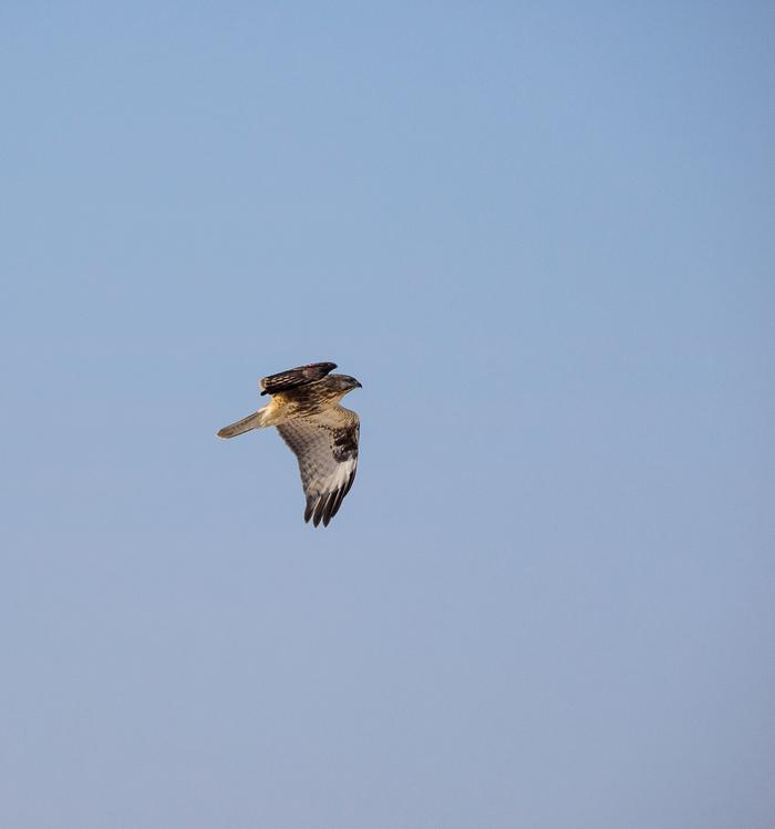 Еще немного птичек Птицы, Прогулка, Природа, Туризм, Покатушки, Море, Длиннопост