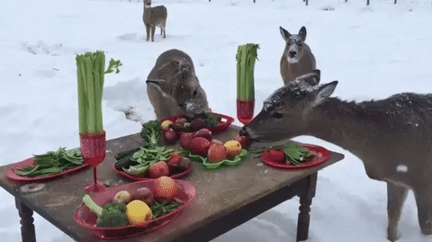Праздничный ужин