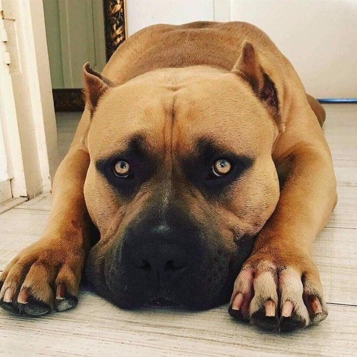 Песик Взгляд, Машина для убийств, Собака
