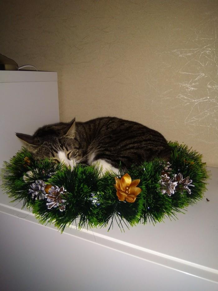 Гнездо Новогоднего кота. Кот, Новый Год, Длиннопост