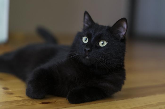 Как выглядит самый вредный кот в мире в редкие минуты покоя Черный кот, Кот, Фотография, Длиннопост