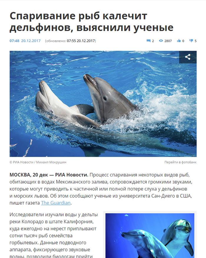 Сообщения об дельфине по английском слове для 4-го класса