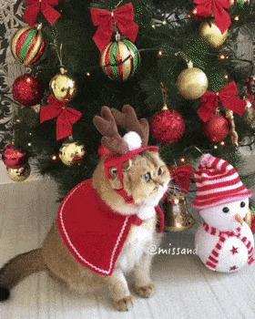 Новогоднего котика вам в ленту :3