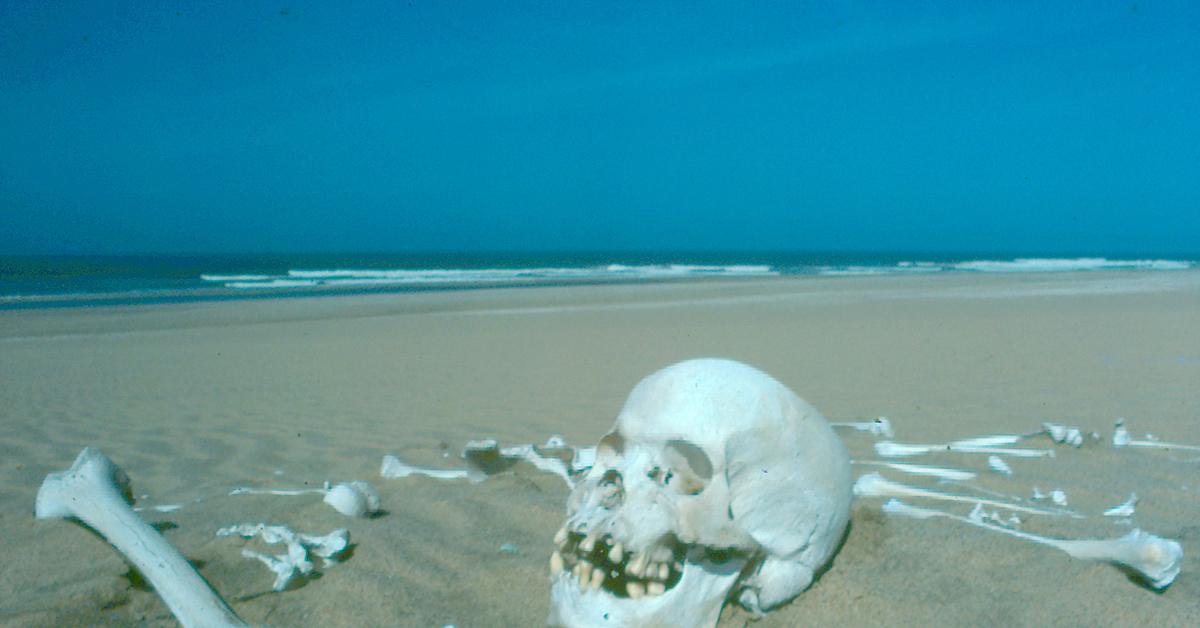 она картинки море скелеты всех начинаниях, поддержки