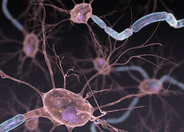 CRISPR/Cas9 затормозила прогресс бокового амиотрофического склероза у мышей Наука, Новости, Медицина, Crispr-Cas9, Редактирование геномов
