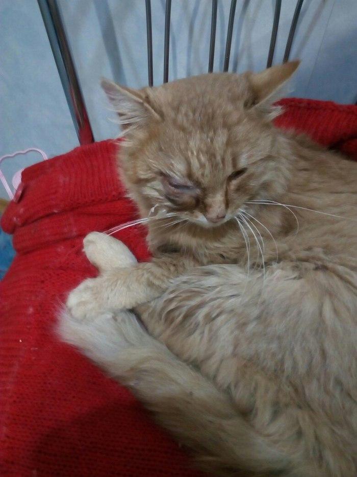 Владельцам самовыгульных кошек. Себастьян. Кот, Bfbbim, Ветеринария, Фотография, Длиннопост, Жесть
