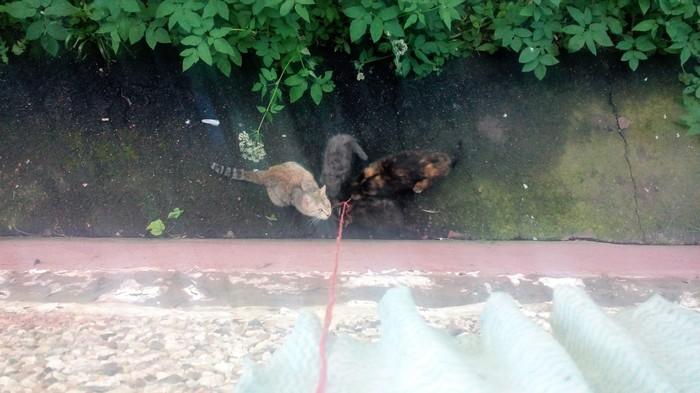 О коте по имени Дио Животные, Кот, Спасение, длиннопост, спасение животных, помощь животным