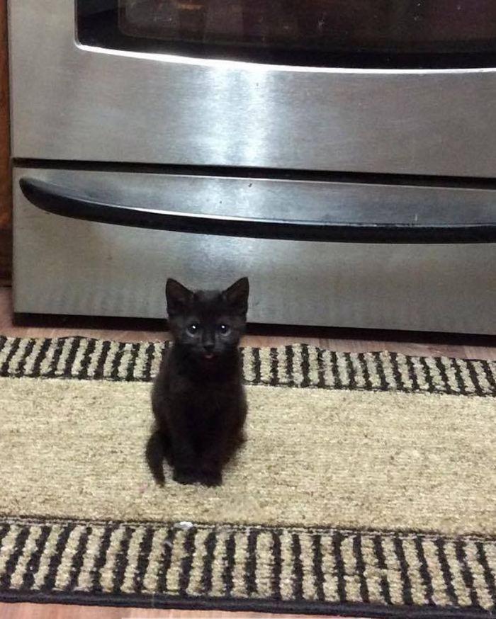 Винифред, мини-котенок  весом 35 грамм.  Преображение Кот, Мини-Котенок, Преображение, Выхаживание, Ветеринар, Длиннопост