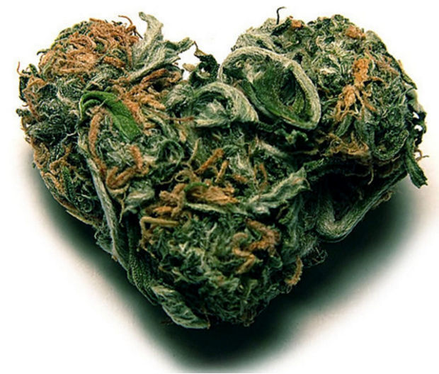 какой корень у марихуаны