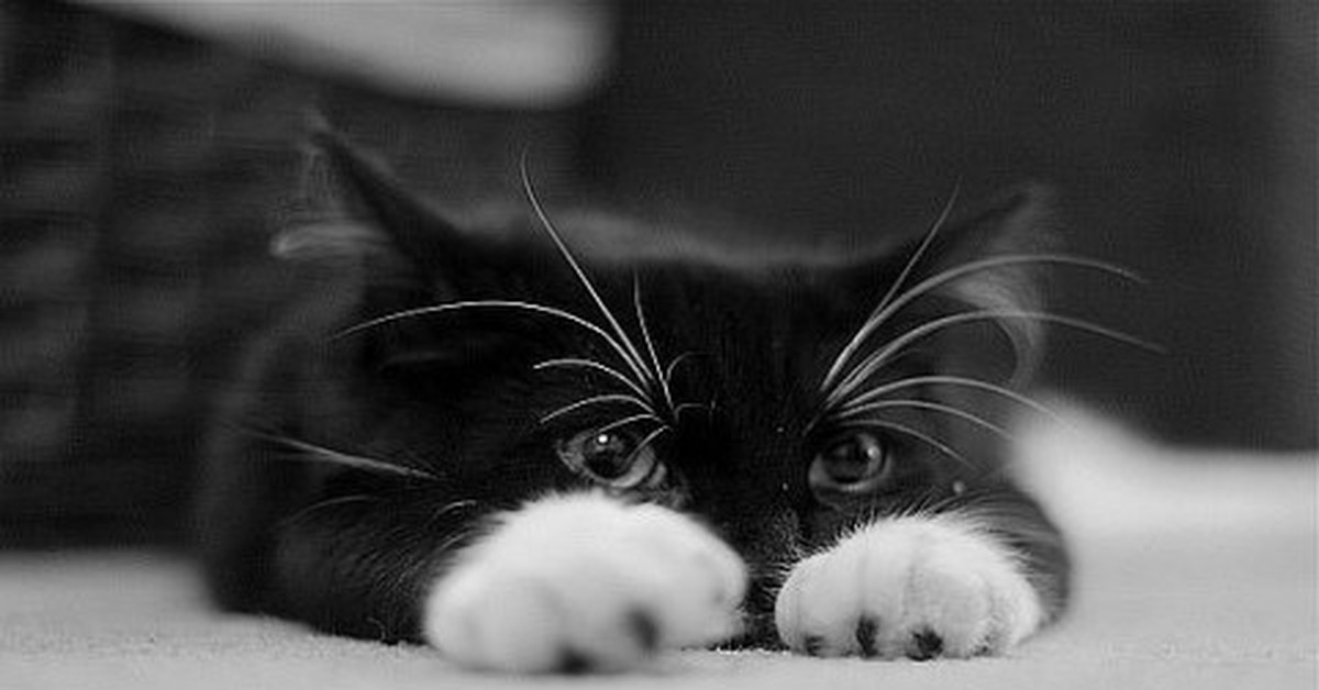 Картинки грустные котята с надписями, картинки добрым утром