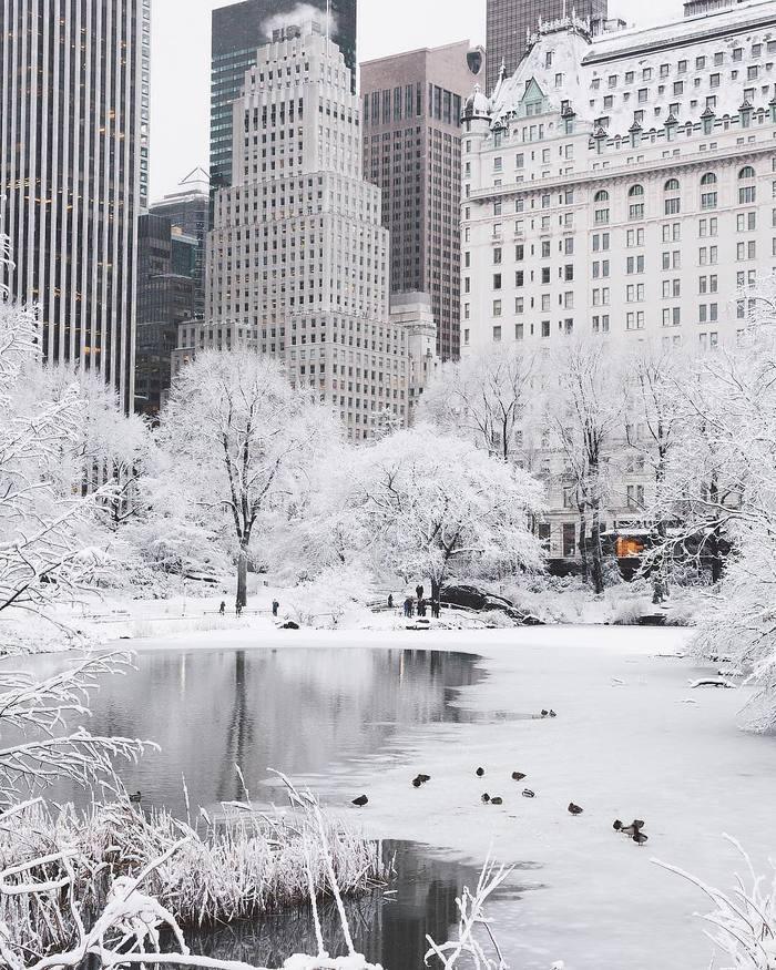 Зима в Центральном Парке Нью-Йорка Фотография, Нью-Йорк, Центральный парк, Зима