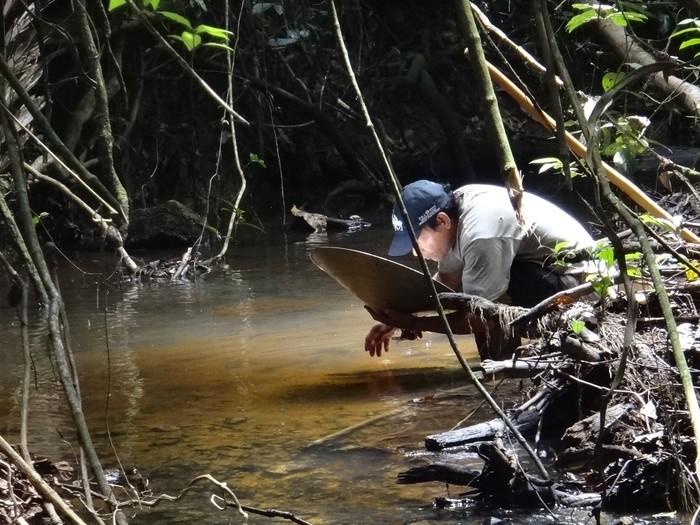 Моя работа: поиск золота в джунглях. Джунгли, Золото, Геологи, Приключения, Работа, Длиннопост, Южная Америка, Гаяна, Видео