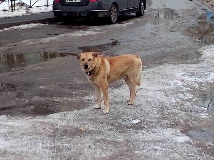 Потерялась собака Пропала собака, Найдена собака, Санкт-Петербург, Собака, Проспект просвещения