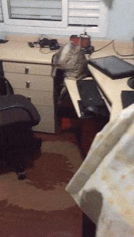 Помни о законе бумеранга, когда смотришь гифки с котиками! Кот, Вконтакте, Комментарии, Порицание, Карма, Гифка