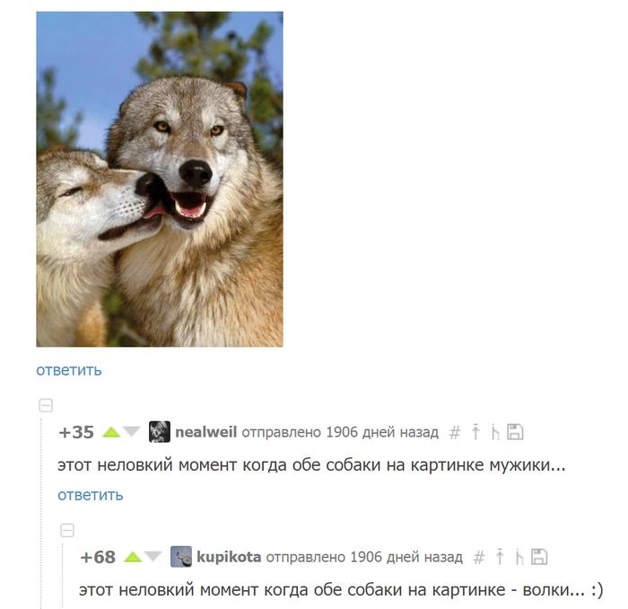 Неловкий момент Момент, Неловкость, Волк, Собака, Комментарии, Комментарии на пикабу