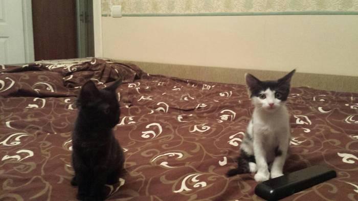 Котяры) Кот, Животные, За что?, Длиннопост