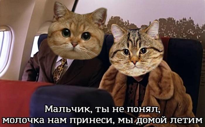 А теперь к важным новостям Кот, Лишний, Аэропорт, Киев