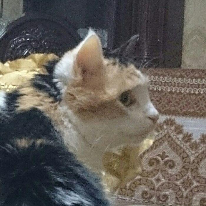Когда уже сел нажираться, а тебе говорят, что сегодня только 30е Кот, Новогодний стол, Длиннопост