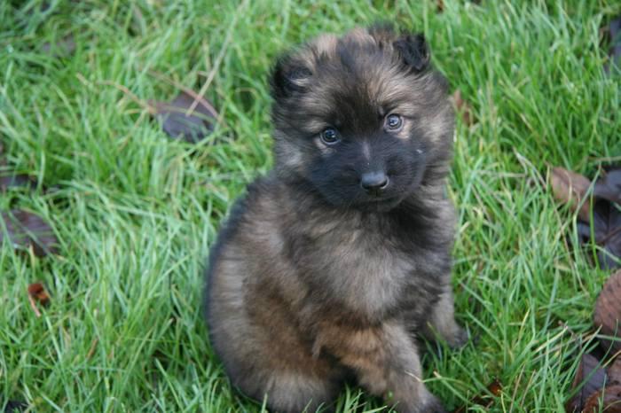 В год собаки с новым другом Собака, Щенки, Милота