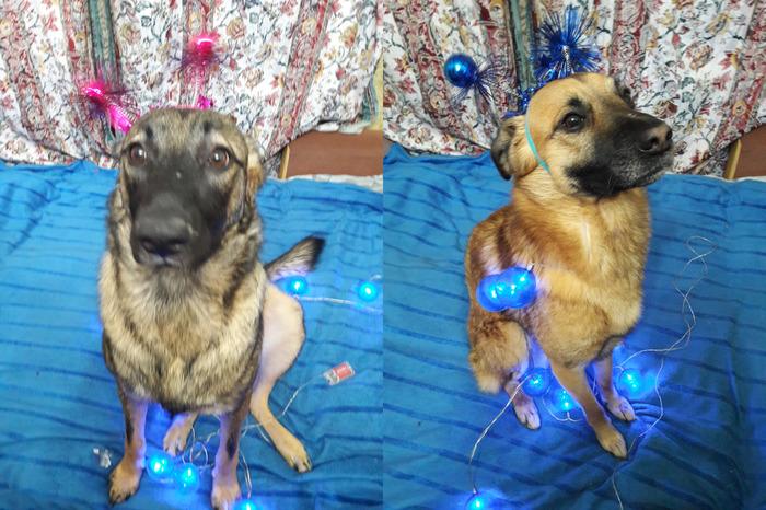 Мы тоже присоединяемся:) Новый Год, Собака, Поздравление