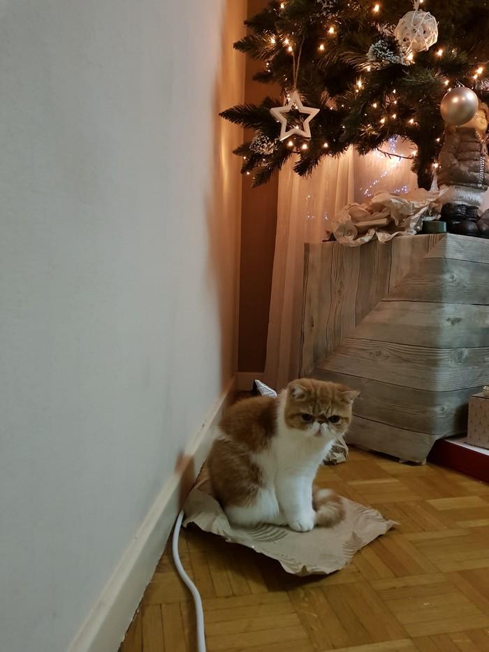 Моя котобезопасная ёлка. Кошатники, Кот, Длиннопост