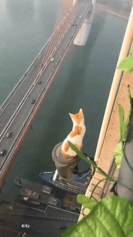 Смотритель моста.
