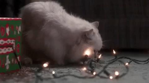 Новогодний котэ Кот, Новогодние каникулы, Dark souls, Гифка