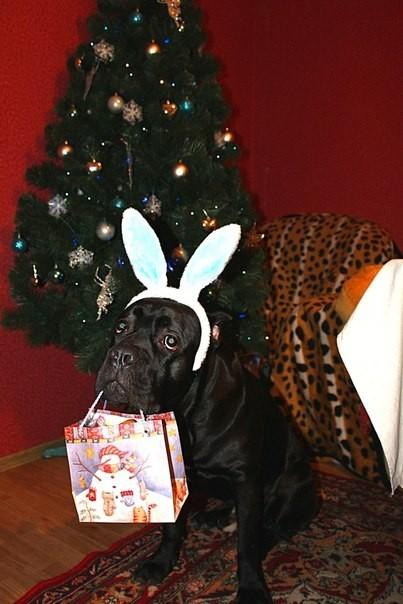С новым годом, годом собаки!