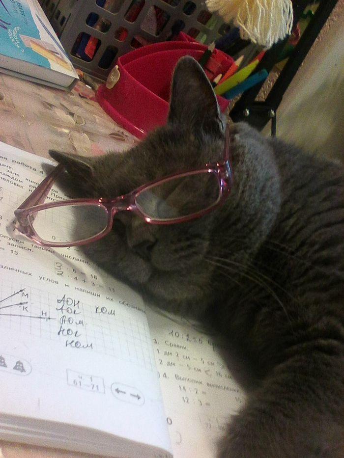 Кот ученый Школьная программа, Кот