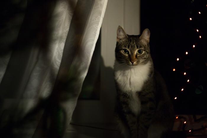 Новогодняя кошка Новый Год, Кошка Масяня, Длиннопост, Кот