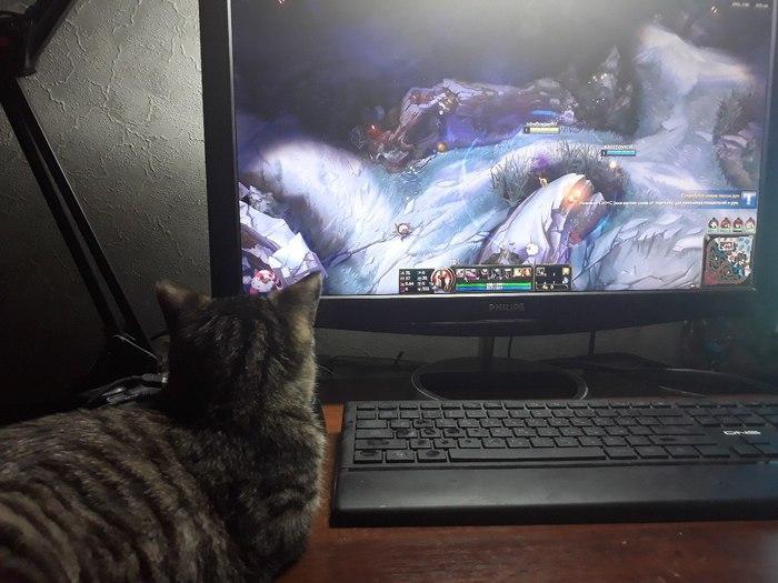 Моя котеечка Кот, Живность, Домашние животные, Ну как тут поиграешь, League of Legends, Длиннопост