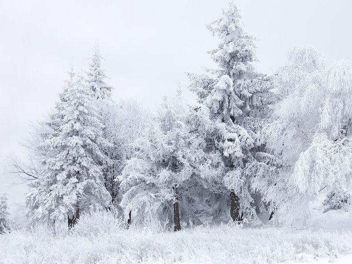 Для всех паникёров про жаркую зиму Зима, Читайте классику, Смерть