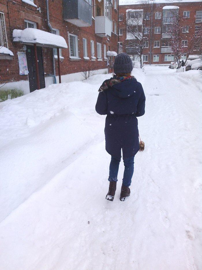 Прогулка с хорьками Хорек, Снег, Прогулка, Длиннопост