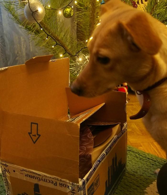 Подарочной радости пост Новый Год, Обмен подарками, Тайный Санта, Мейнстрим, Собака, Кролик, Длиннопост