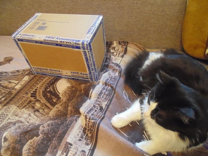 Обмен подарками из Калиниграда в Саратов Обмен подарками, Тайный Санта, Длиннопост