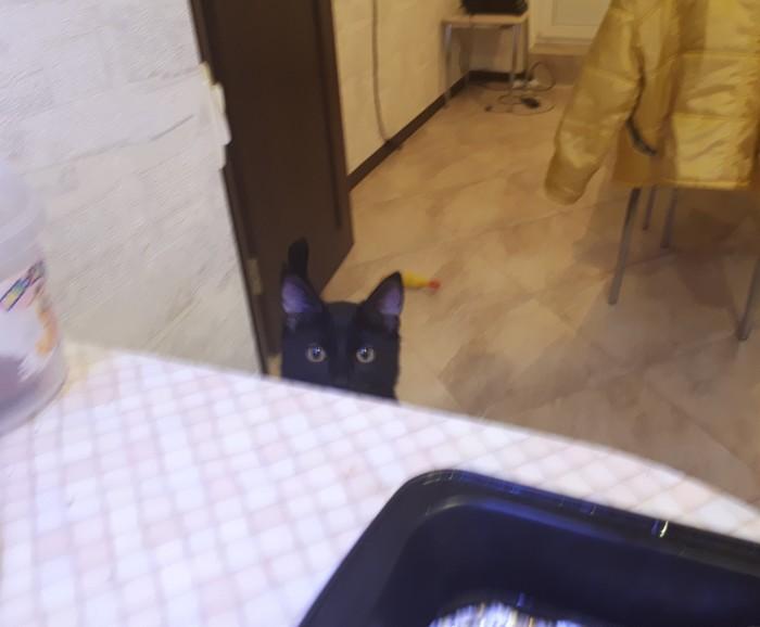 Рыба и кошка Черный кот, Кот, Фотография
