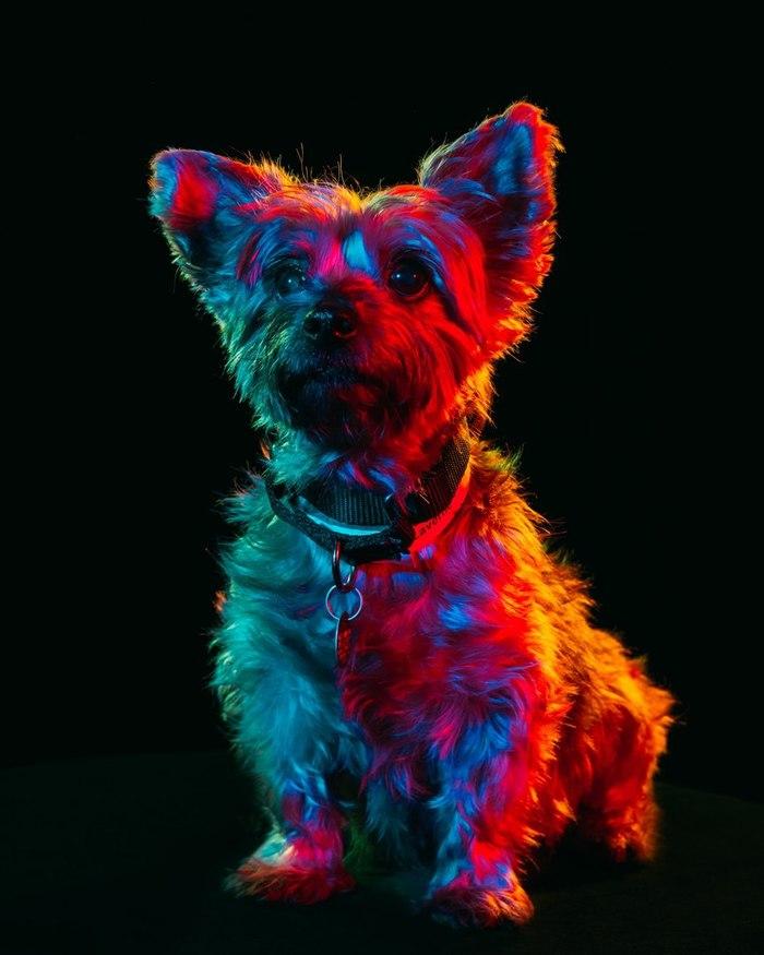 нижней картинки с разноцветными животными фотоэффект