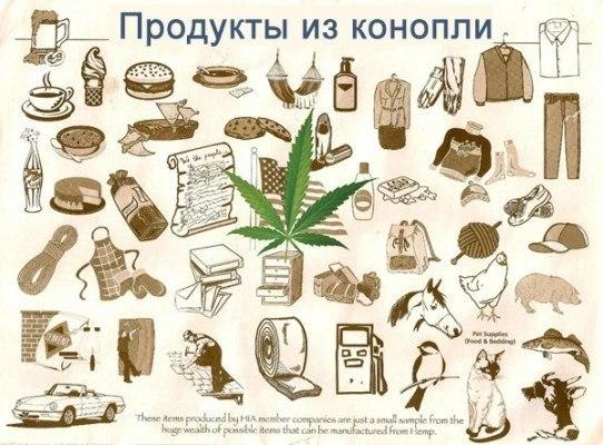 В России прошел Международный форум коноплеводов Конопля, Коноплеводство, Сельское хозяйство