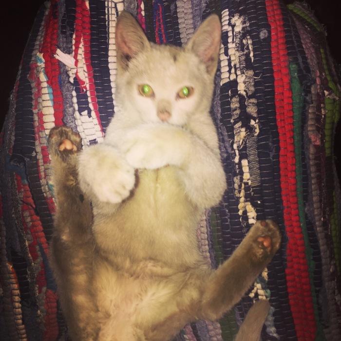 Спасение котёнка и котёнок спасает 3 людей. кот, спасение животных, автосервис, длиннопост