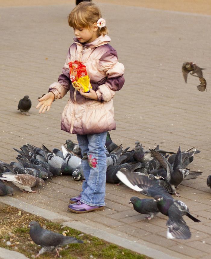 Девочка кормит голубей (2 фото) Фотография, Девочка, Голубь