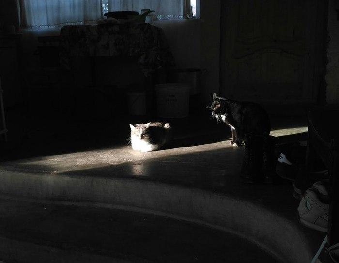 Январское солнышко. Кот, Длиннопост, Коты греются