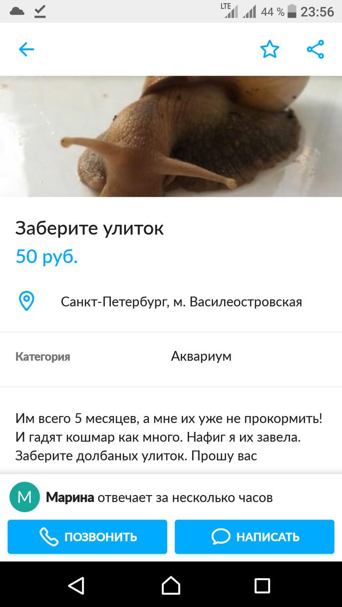 Авито Переоценила объявление скриншот Авито
