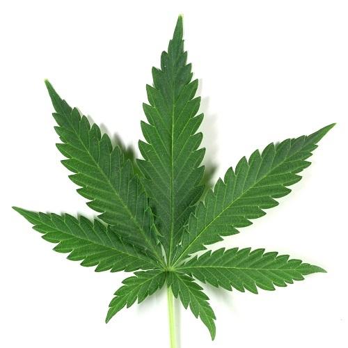Марихуана t i фон для аска с марихуаной