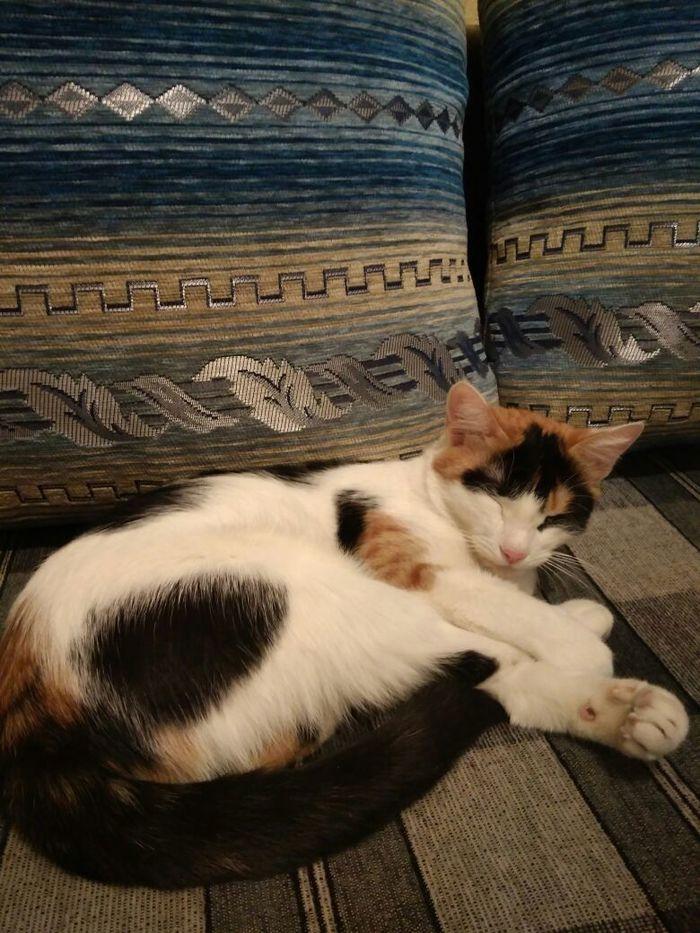 Помогите пристроить кошек Домашние животные, Выброшенные животные, Длиннопост, Кот, Помощь животным, В добрые руки, Одинцово