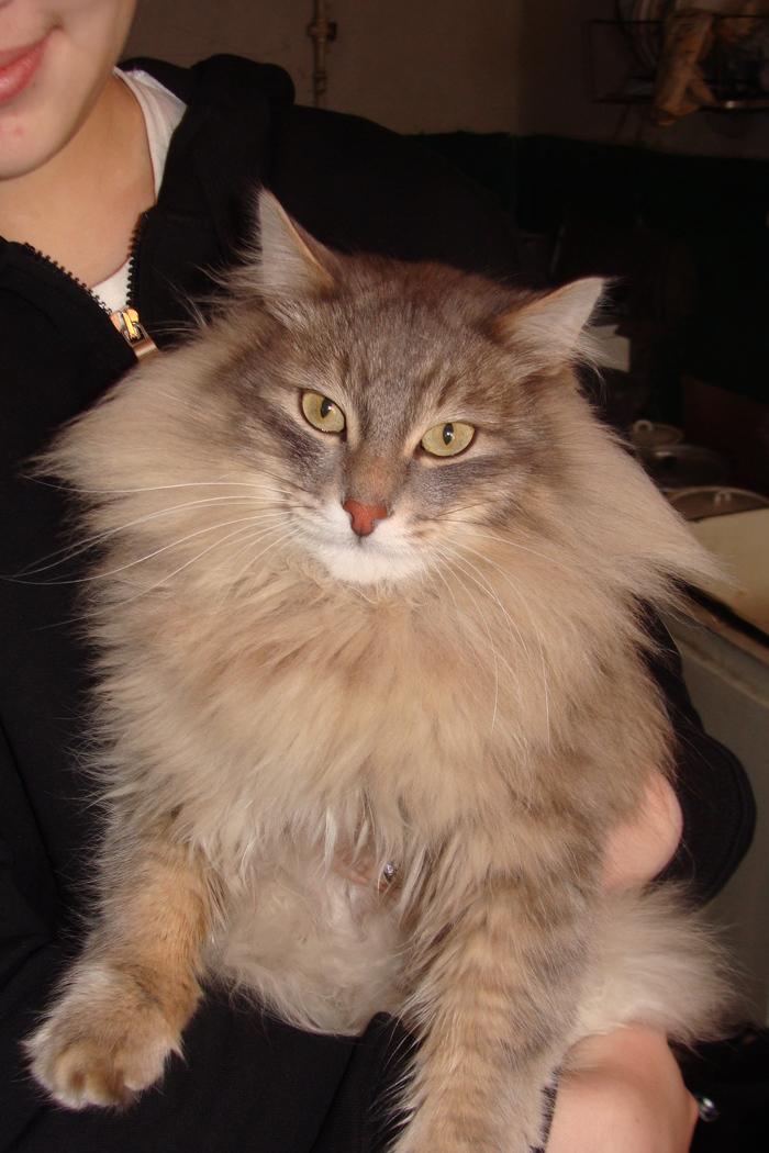 Кот моей бабушки Кот, Котомафия, Длиннопост