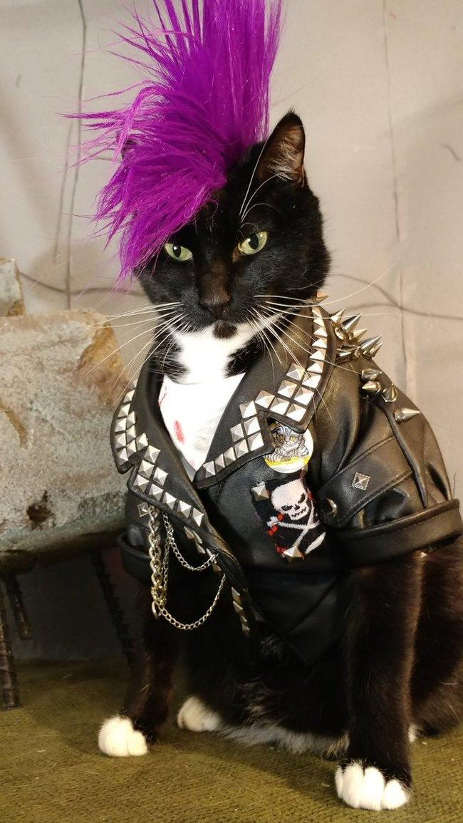 Punk Cat. Панк, Кот, Длиннопост
