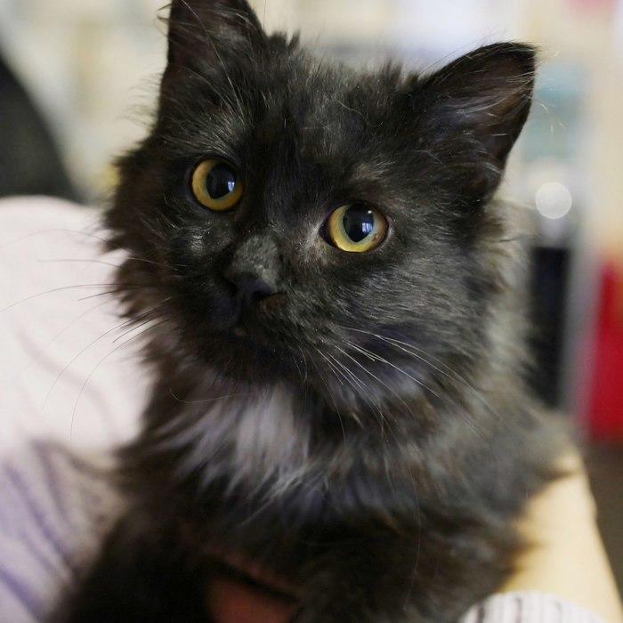 Кот Кокос ищет любовь Москва, Найденыш, В добрые руки, Домашние животные, Длиннопост, Кот, Помощь животным