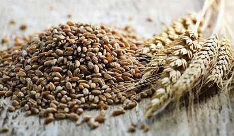 Россия обогнала Украину по экспорту зерна Agronews, Россия, Зерно, Украина, США, Экспорт, Рынок, Кукуруза